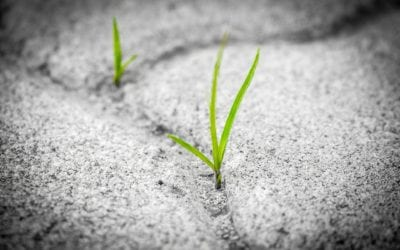 Resilience Hacks for Teachers during Covid –  Feature SEC Ed